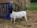 ewe-2
