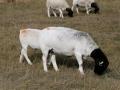 ewe-4